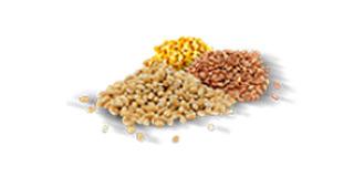 Indústria Alimentícia de Alimentos e Animais